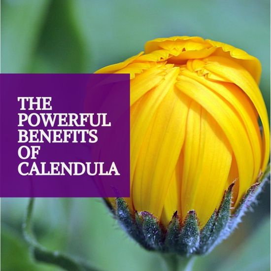 The powerful benefits of calendula