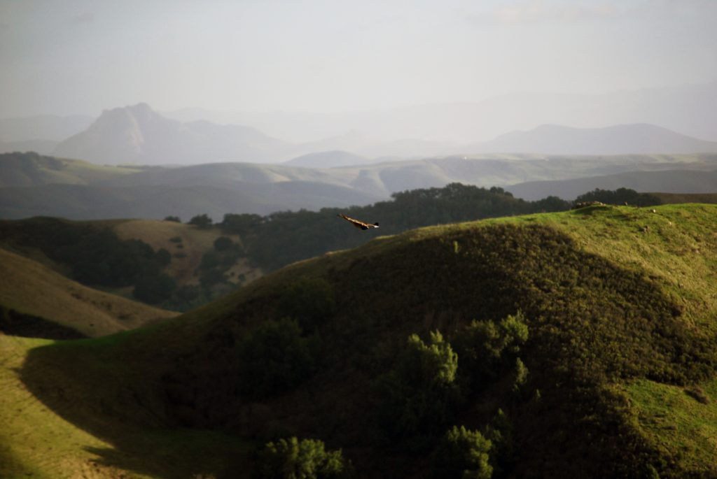 Rolling hills like this make Napa Valley both a gorgeous and a romantic RV destination.