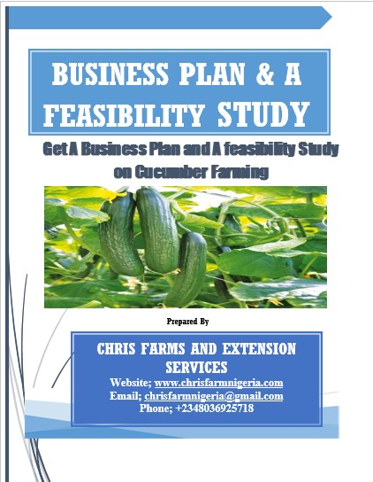 Cucumber Farming Quick Money Spinner Via A Business Plans/Feasibility Study