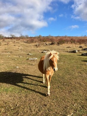 sinle pony