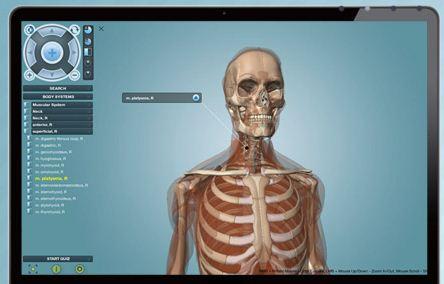 anatomy_pres.JPG