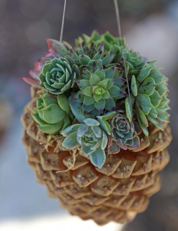 How to make a pine cone planter