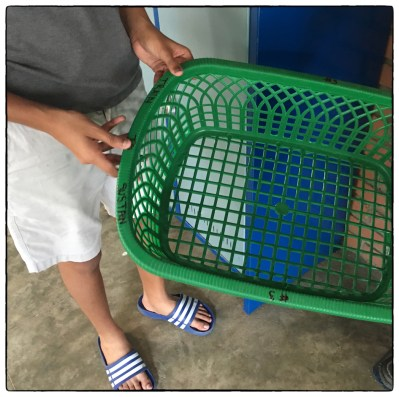 New green baskets that are being used for classroom paper collection