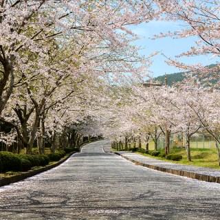 2015.04 – 君津市 -山滝野 桜-(1)