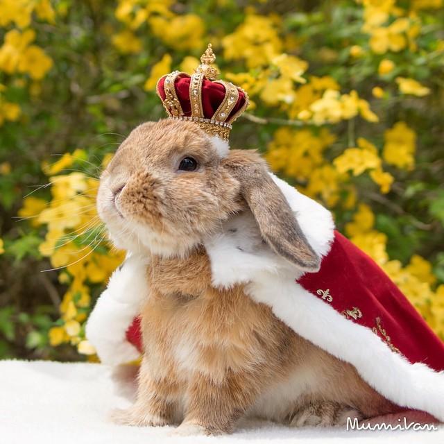 Conejo Pui Rey