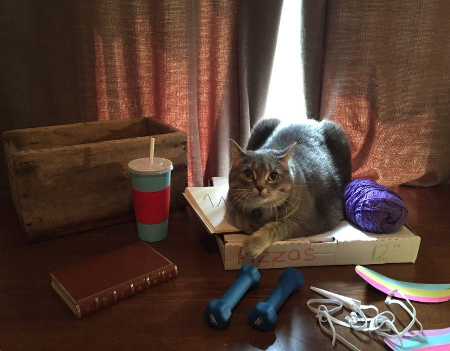 Hombre recrea los stickers de Pusheen Cat con su gato -12