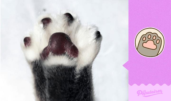 Hombre recrea los stickers de Pusheen Cat con su gato -13
