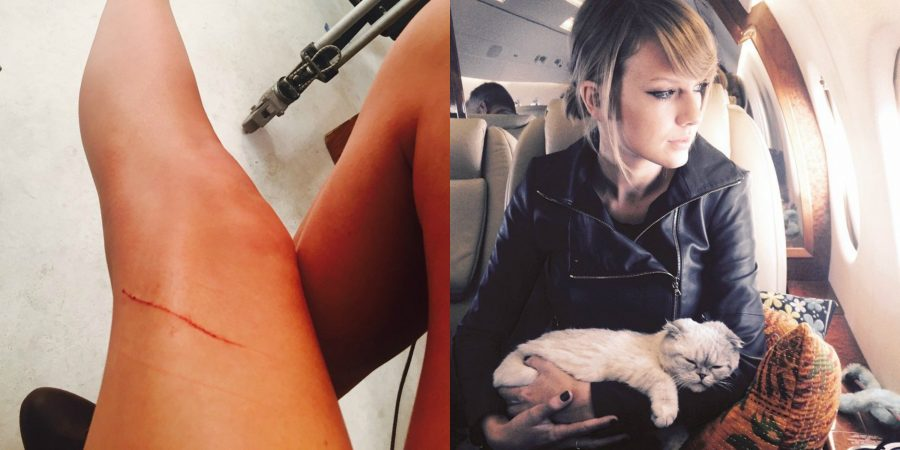 Taylor-Swift-raguño-gato