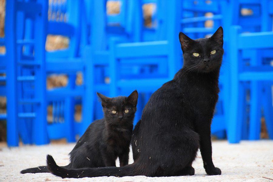 Gatos negros superstición
