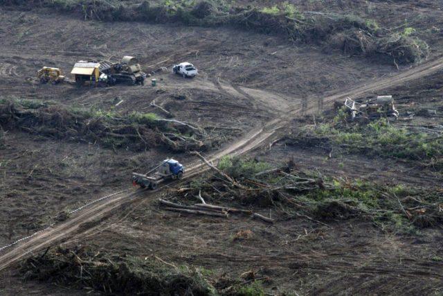 Tareas de desmonte dentro de un área declarada Reserva de Biosfera de las Yungas por la UNESCO, en el Norte de Salta. Foto: Greenpeace/Telam
