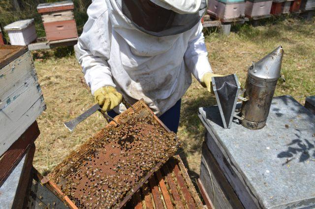 Las abejas necesitan diversidad de hábitat. Crédito: www.flickr.com/photos/intacrban/
