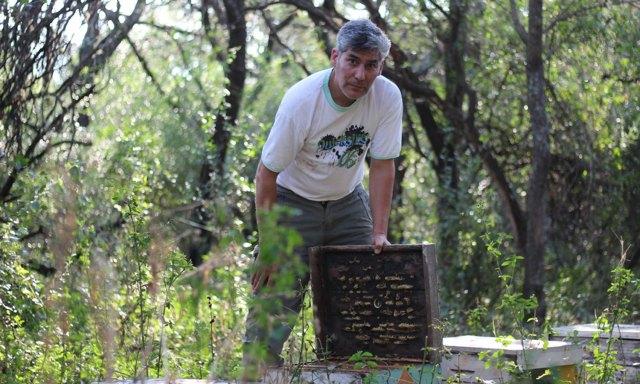 El apicultor Marcelo Sosa inspecciona una colmena en la que ya no hay abejas.