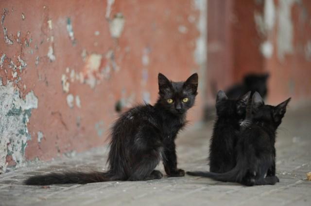 Los gatos fueron introducidos en Martín García por los europeos hace cinco siglos.