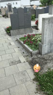 Hier brauche ich keine Pokemons