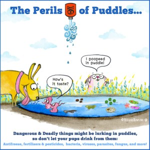 The Perils of Puddles