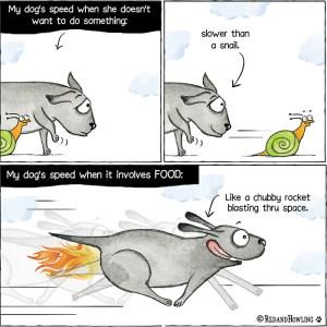 My Dog's Speed