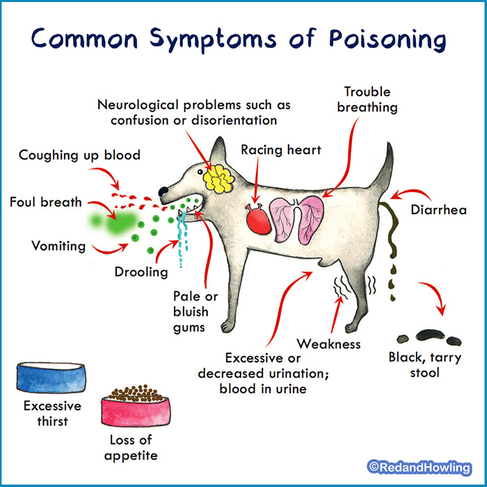 redandhowling_PoisoningP01