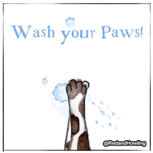 Wash Your Paws! (GIF)