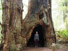 Found a little hobbit hole!