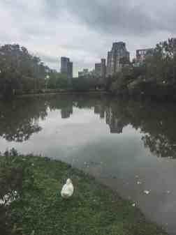 da'an park taipei taiwan