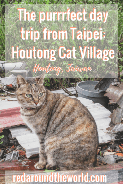 houtong cat village in Taiwan