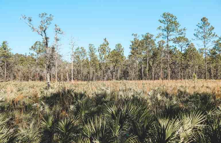 Oleno state park florida