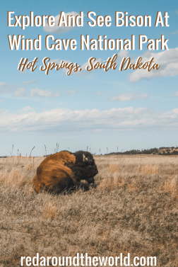 Wind Cave National Park is an underrated national park in the US. It's just a few hours from the badlands and they make the perfect South Dakota road trip. #southdakota #travel #roadtrip #usa #bison #wildlife #midwest