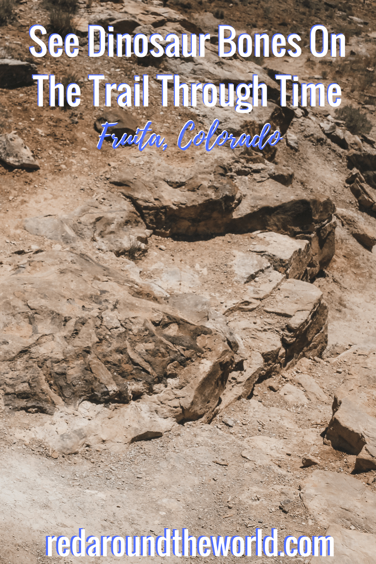 See Dinosaur Bones On The Trail Through Time (3)