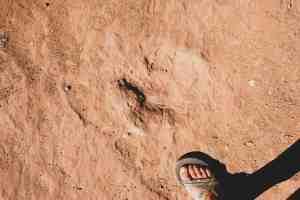 Butler wash dinosaur tracks