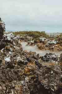 galapagos islands Las Tintoreras