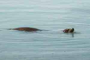 sea lion galapagos islands Las Tintoreras