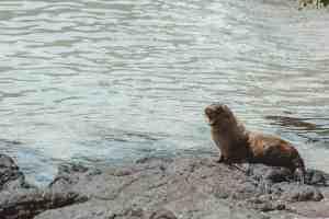 sea lions galapagos islands Las Tintoreras