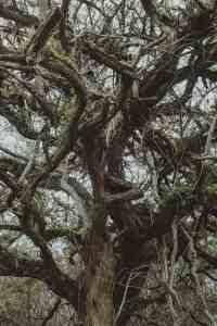 tree galapagos islands