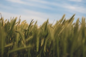 soft grass in new zealand