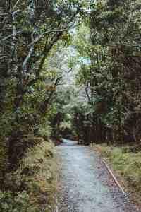 jungle trail in new zealand