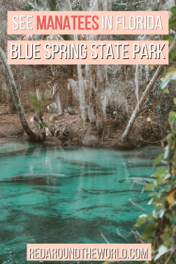 Blue Spring State Park is one of the best places to see manatees in Florida. You can see the manatees by kayak. This is the perfect day trip from Orlando.