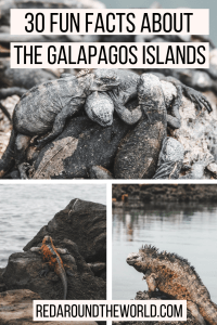 These pictures and fun facts about the Galapagos Islands will have you planning your dream trip to the Galapagos. Learn about the Galapagos wildlife.