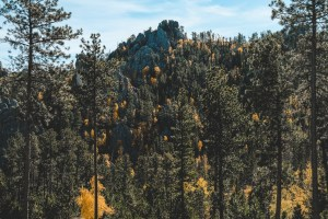 The needles highway black hills south dakota