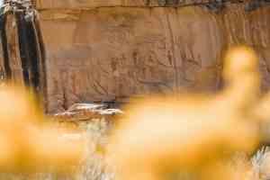sego canyon rock art utah