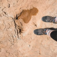 How To See The Copper Ridge Dinosaur Tracks In Moab