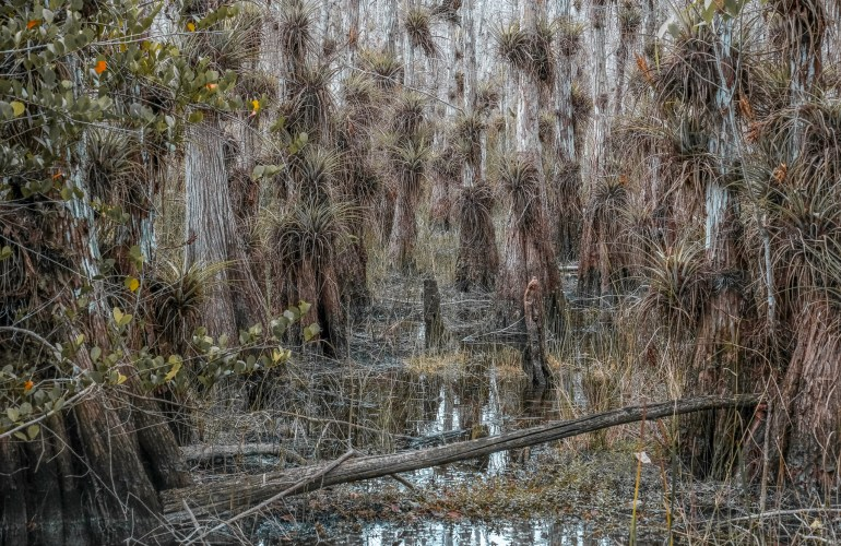 Gator Hook trail big cypress Florida