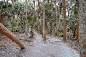 Myakka state park canopy walk