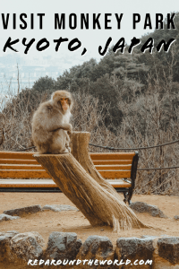 Monkey Park Iwatayama is a great place to visit if you want to see snow monkeys in Japan. The monkey park is an easy day trip from Kyoto. Japan things to do | japan travel | japan vacation | kyoto things to do | kyoto travel | kyoto vacation | japan in winter | monkeys in japan | kyoto in winter | monkeys in kyoto | kyoto japan
