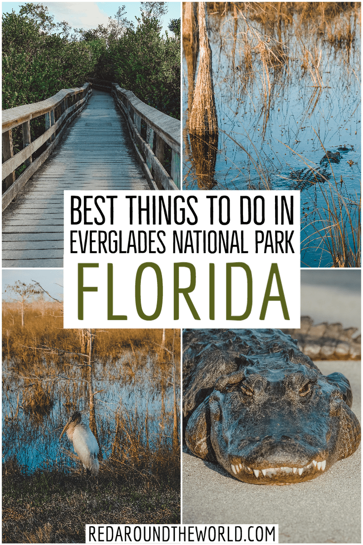 If you only have one day in Everglades National Park, you'll be able to stay busy. There are plenty of great hikes in Everglades National Park. Do a boat tour. everglades national park | everglades national park hiking | everglades hiking | everglades camping | everglades national park camping | everglades airboat tour | everglades pictures | everglades national park activities | florida road trip | south florida road trip | florida vacation