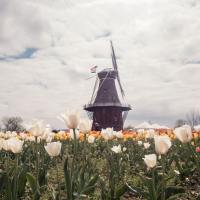 5 Things To Know Before Visiting Holland, Michigan