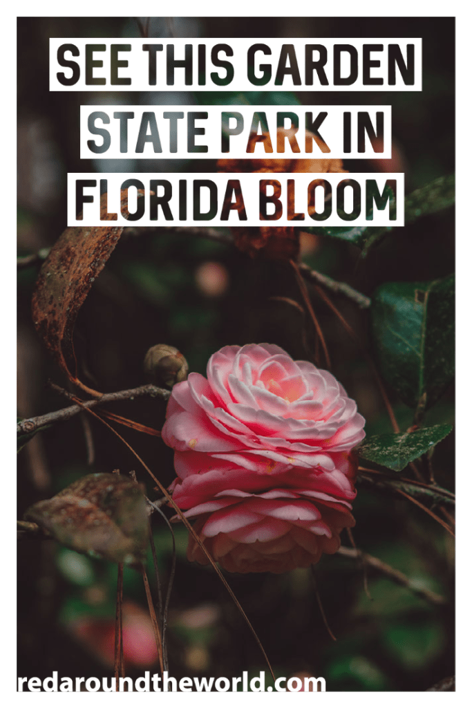 The Alfred B Maclay Garden State Park In Tallahassee is the perfect way to spend a winter afternoon, enjoying the fragrant blooming flowers.  Florida road trip | florida state park | tallahassee things to do | tallahassee florida | florida vacation | florida things to do | florida gardens | gardens in Florida