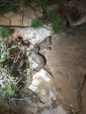 snakes in utah