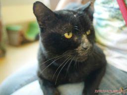 Meet Bob at the Monmouth County SPCA 12