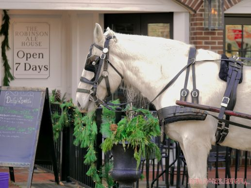 Red Bank Holiday Decorations Horse Rides 18 of 33