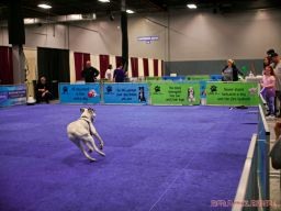 Super Pet Expo April 2018 21 of 117